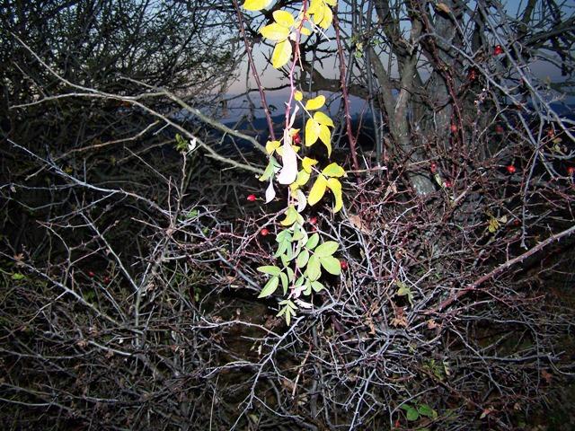 Златното на есента на мръкване...